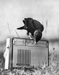 Cuervo Radio